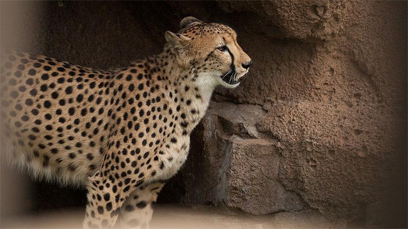 Wildlife Tv Channels